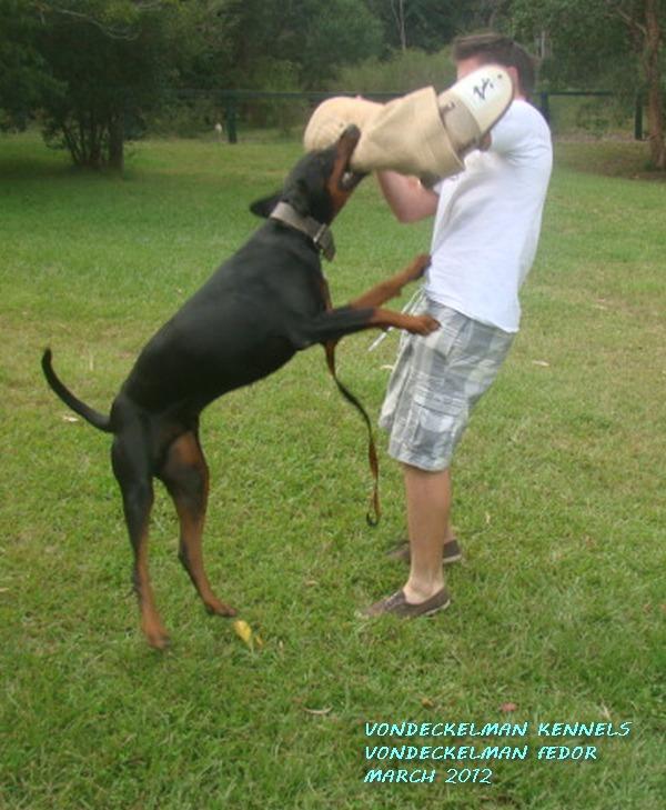 Dog Kennels For Sale Coffs Harbour
