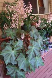 PLANTS - CHEAP!